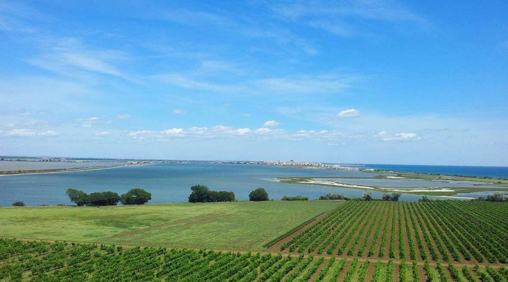 Vignes-vignoble-de-maguelone-Oenotourisme_format_1180x700
